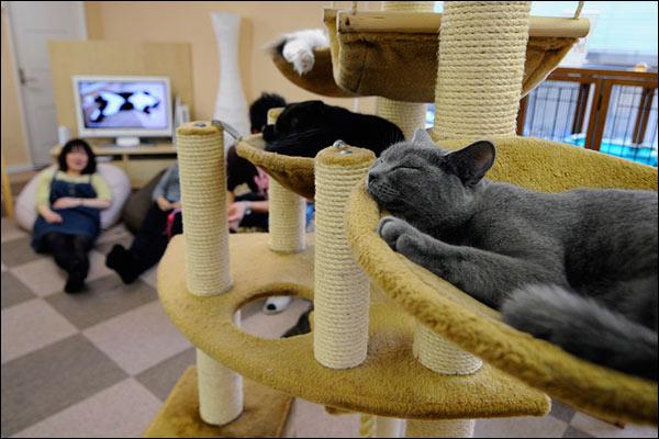 Cat Cafe-2