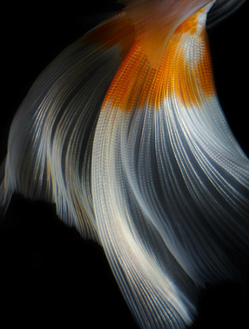 tamsin allen    creative  u2014 photography    still life fish photography by hiroshi iwasaki